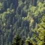 Νομοσχέδιο ΥΠΕΝ: Τέσσερις παρεμβάσεις για το περιβάλλον - Νέο πλαίσιο για τους ΦΔΠΠ