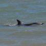 Πώς επηρεάζονται τα δελφίνια από την υποβρύχια ηχορύπανση;