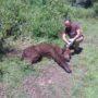 Ηλικιωμένη αρκούδα πέθανε στην Πολυκάρπη Καστοριάς από φυσικά αίτια (φωτο+vid)