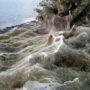 Τεράστιο πέπλο αράχνης σκέπασε 300 μέτρα βλάστησης στο Αιτωλικό (φωτο)