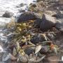 Πίννα: Άλλο ένα προστατευόμενο θαλάσσιο είδος κοντά στον αφανισμό (φωτο)