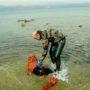 Φώκια μπλέχτηκε σε δίχτυα στη Σκόπελο - Κινητοποίηση για την απελευθέρωσή της