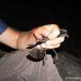 Ένας Μαλτέζος στην Ελλάδα: Μια σπουδαία ανακάλυψη θαλασσοπουλιού στο Αιγαίο (φωτο)