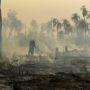 Η σόγια και το βοδινό κρέας ευθύνονται για τις μεγάλες πυρκαγιές στον Αμαζόνιο