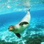 Στην Αλόννησο το μεγάλο ραντεβού των εννέα Φορέων Διαχείρισης Θαλάσσιων Προστατευόμενων Περιοχών