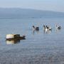 Ρομποτικό σκάφος μετρά την ποιότητα του νερού στη λίμνη Τριχωνίδα (vid)